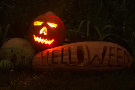 helloween: BIg real helloween pumpkin. treats or  tricks