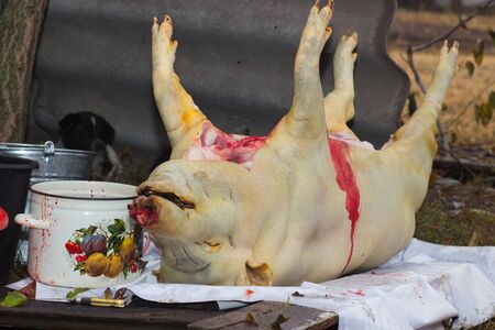 carcass meat: cutting of pig carcasses in the Ukrainian village Stock Photo
