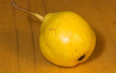 pera: Forelle peras una reliquia variedad de Pyrus communis la pera europea o pera común