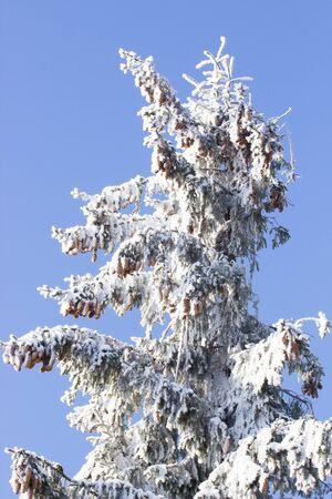 winter's tale: Frozen tree on Winters Tale and blue sky