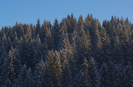 Frozen tree on Winters Tale and blue sky