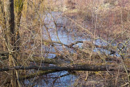 quagmire: morning time in swamp area. Landscape . View from above