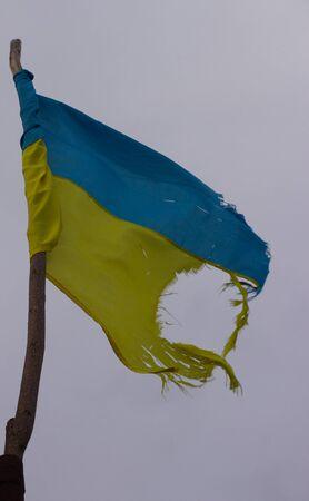 ukrainian flag: Torn Ukrainian flag on the background of a white
