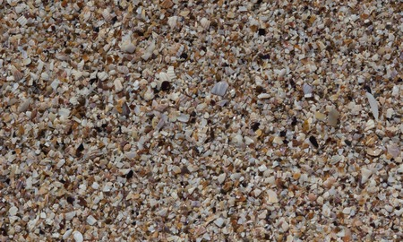 scallop shell: Sea Shells Seashells - variety of sea shells from beach - panoramic - with large scallop shell.