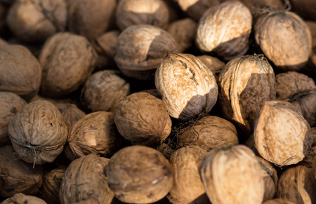 The Circassian walnut texture. Background of walnuts