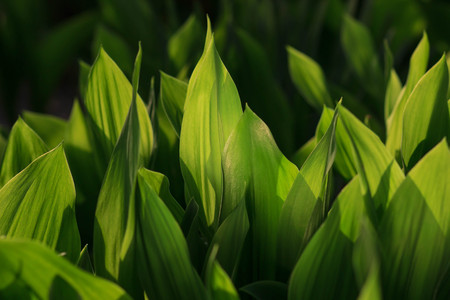 lily of the valley. Leaf background