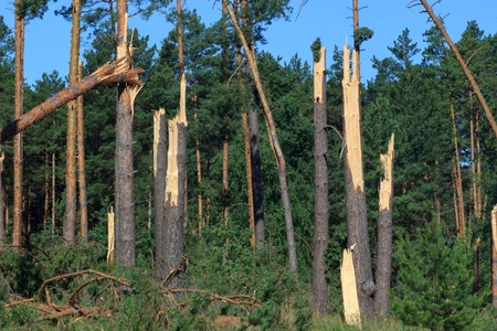A broken tree in half. As a result of the hurricane