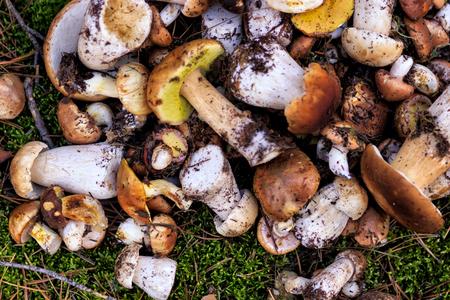 Mushrooms in forest. healthy food Фото со стока