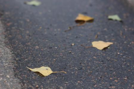 Maple leaves on wet road Фото со стока