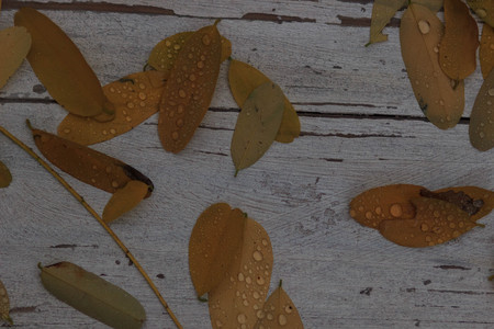 The Autumn background with leaves and rain water drops