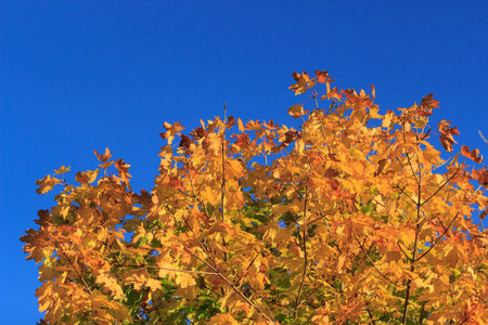 Colorful foliage in the autumn park Autumn leaves sky background Autumn Trees Leaves in vintage color