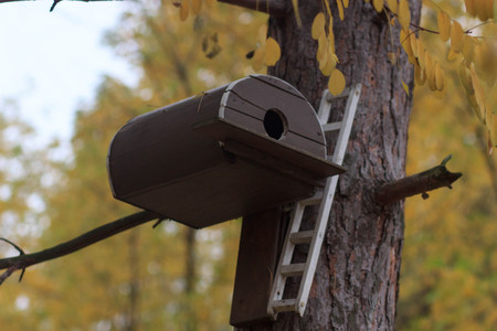 birdhouse on a tree in forest Park , hand wood shelter for birds to spend the winter