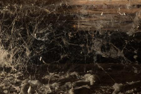 Веб на чердаке дома, уникальный момент, паук