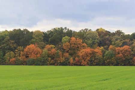 Autumn Landscape. Colorful fall Фото со стока - 90112166