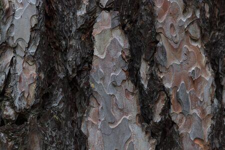 Кора дерева текстуры