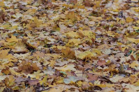 Красный и оранжевый Осенние листья