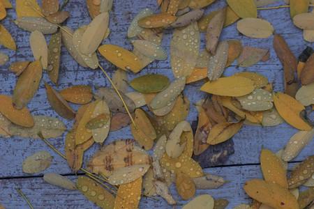 Осенний фон с листьями и капли дождевой воды Фото со стока
