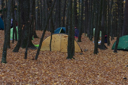 Camping area with multi-colored tents in forest Фото со стока - 90112171