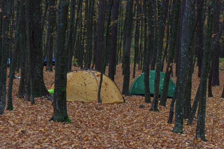 Camping area with multi-colored tents in forest Фото со стока - 90052922