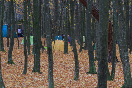 Площадка для установки палаток с разноцветными палатками в лесу Фото со стока