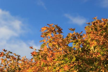 Красочная листва в осеннем парке / Осенние листья фон неба / Осенние деревья Листья в старинном цвете Фото со стока - 90052932