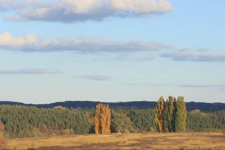 Красочная листва в осеннем парке  Осенние листья фон неба  Осенние деревья Листья в старинном цвете