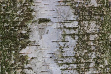 Tree bark texture Фото со стока - 90041460