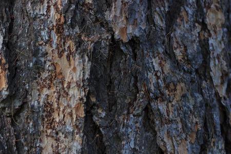 Tree bark texture Фото со стока - 90041461
