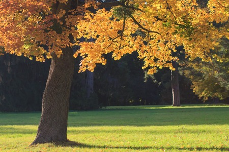 Autumn Landscape. Colorful fall nature Фото со стока