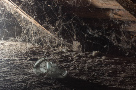 Web in the attic of the house, a unique moment, a spider