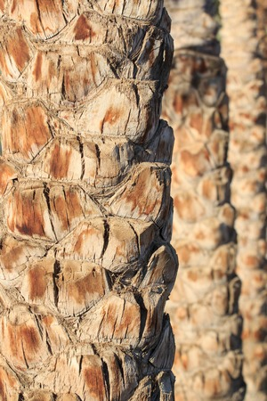 Palm tree trunk texture close up photo