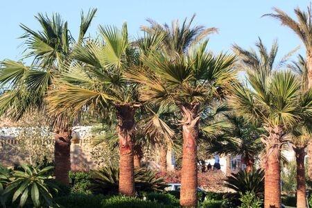 beautiful landscape with palm trees