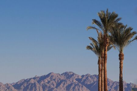 Beautiful landscape with palm trees. Фото со стока