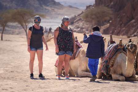 Sharm El Sheikh, Egypt - January 24, 2018:people traveling on camels in egypt desert