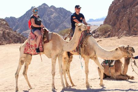 Sharm El Sheikh, Egypt - January 24, 2018:people traveling on camels in egypt desert