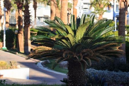 small palm tree Фото со стока