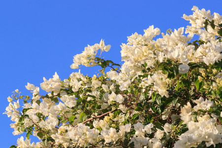 Flowering bush on the hotel in Egypt. Фото со стока