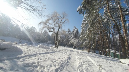 Winter road through the forest.