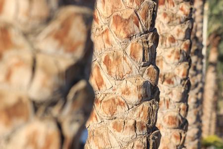 Palm tree trunk texture close up photo. Фото со стока