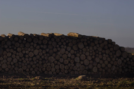 Wooden Logs with Forest on Background  Trunks of trees cut and stacked in the foreground, green forest in the background with sun rays