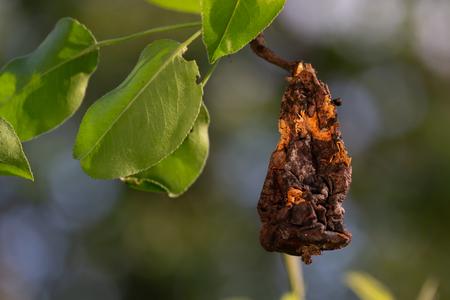 Rotten plant from the tree. Фото со стока - 101318533