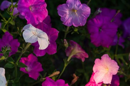 Beautiful flowers background for wedding scene. Фото со стока