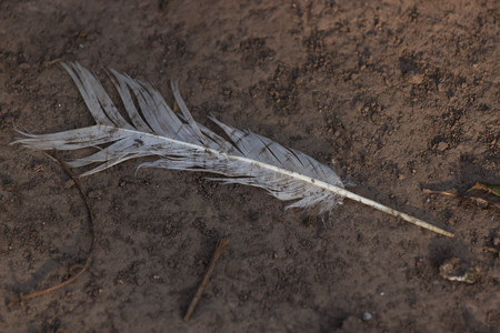 white feather lying on the ground indicating direction.