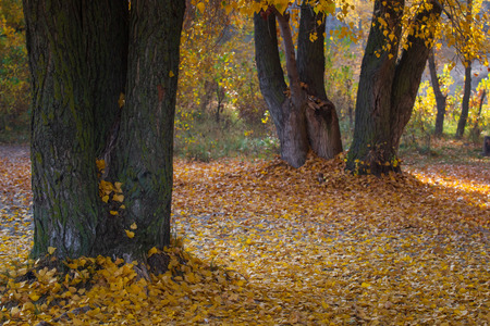 Beautiful european forest at fall. Autumnal colors in forest.