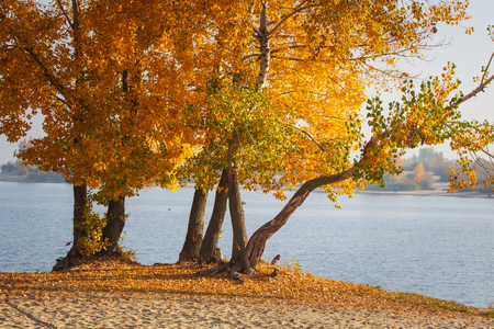Autumn forest lake landscape. Autumn forest lake water scene. Golden autumn forest lake view.