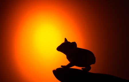 Silhouettes of animals on sunset background,