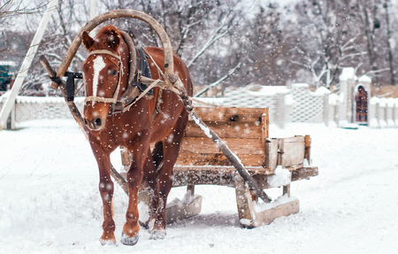 Browne horse pulling wooden sleigh in winter