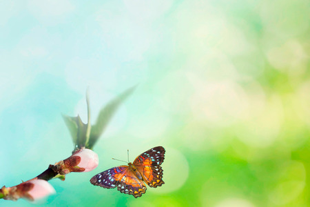Beautiful colored butterfly in flight and branch of flowering apple tree in spring at Sunrise on light blue and pink background macro. Amazing elegant artistic image nature in spring Stockfoto