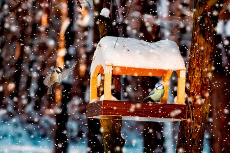 mésange dans la mangeoire d'oiseaux d'hiver enneigée Banque d'images
