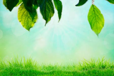 Niebo i trawa tło, świeże zielone pola pod błękitnym niebem na wiosnę.